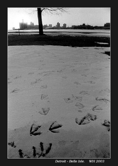 belle_footprints0.jpg