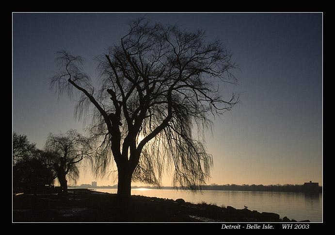 rivertreesil0.jpg